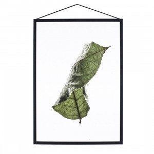 Floating Leaves Poster A3 (op=op)